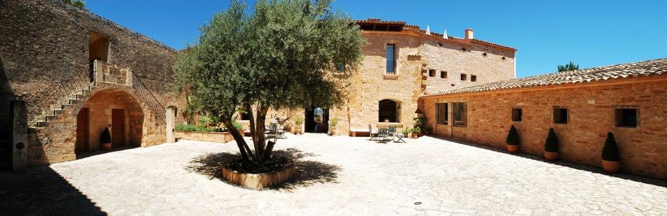 Hochzeit auf Mallorca im Casal Santa Eulalia Sektempfang Olivenbaum