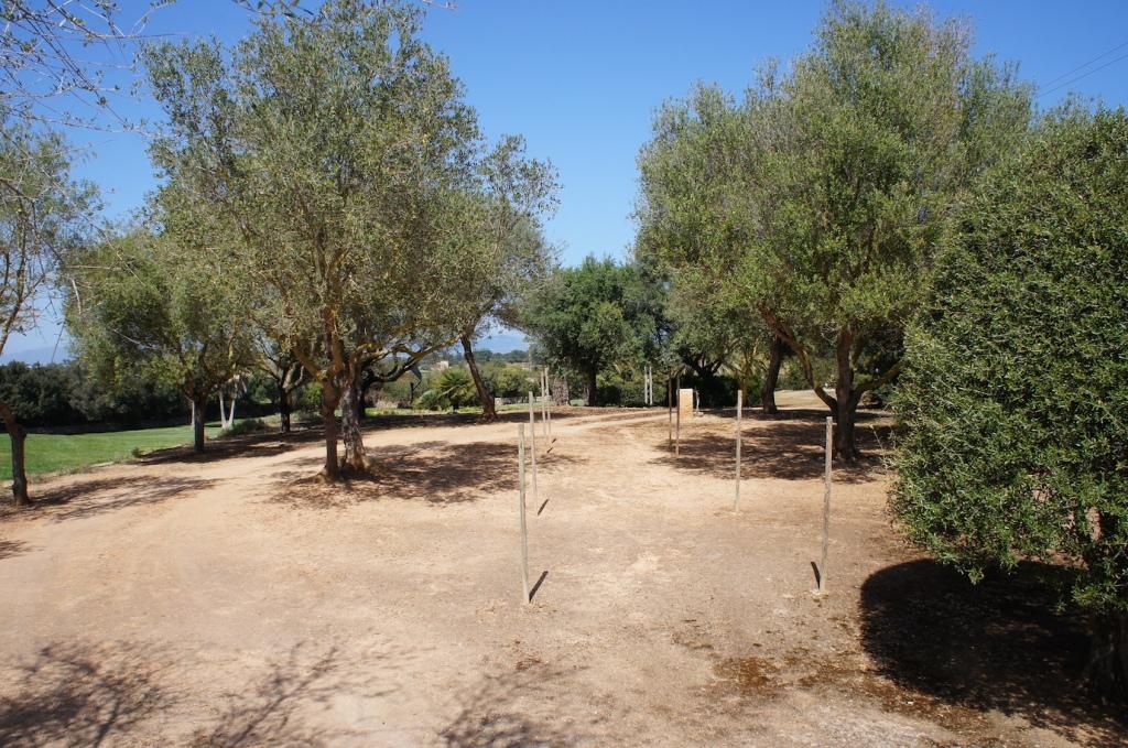 Freie Trauung Hochzeit auf Mallorca Hochzeitsplaner Olivenbäume